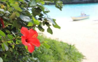 石垣島で行われているミドリムシ(ユーグレナ)の培養