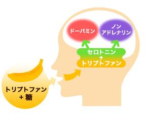 トリプトファンと糖が脳に働く流れを解説した図
