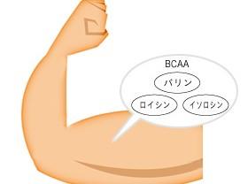 ミドリムシ(ユーグレナ)に含まれるバリン、ロイシン、イソロイシン(BCAA)が多くある筋肉の図