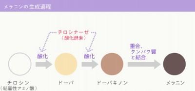 メラニンの生成過程を解説した図