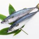 DHAやEPAを多く含む青魚の写真