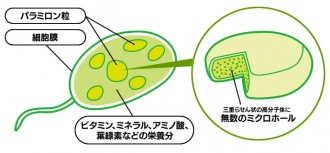 花粉症におけるパラミロンの効果