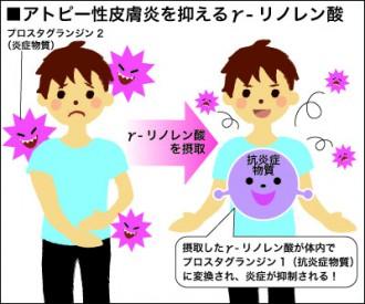 アトピー性皮膚炎を抑える効果のあるガンマ-リノレン酸を解説した図
