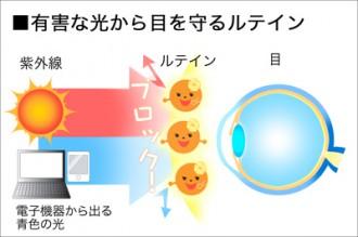 有害な光から目を守るルテインはミドリムシに含まれている