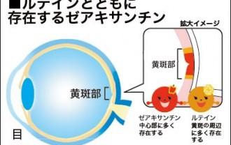 ルテインとともに目の中に存在するゼアキサンチンを解説した図表