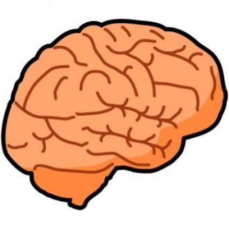 脳のイラスト│ミドリムシ(ユーグレナ)に含まれるEPAは脳の働きに活を入れてくれる栄養素