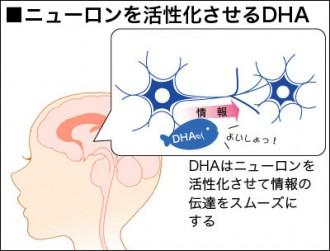 ニュートロンを活性化させるDHAの働きを解説した図表