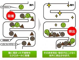 パラミロンの腸内での動きを開設した図表