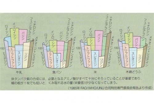 アミノ酸のバランス解説イラスト