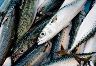 新鮮な鯖の画像│ミドリムシ(ユーグレナ)のほか青魚に多く含まれる成分「EPA」とは?