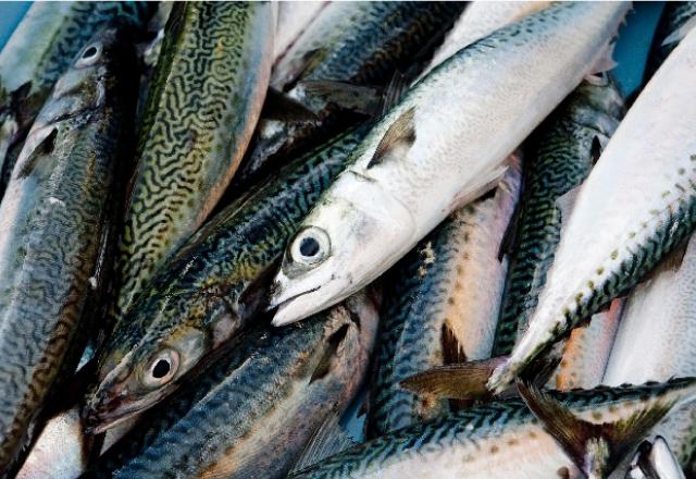 新鮮な鯖の画像