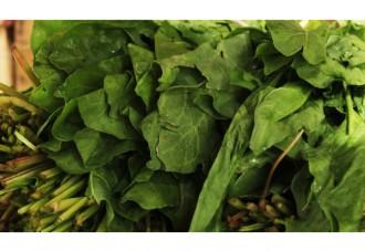 ほうれん草の画像│厚生労働省がサプリメントでの摂取を推奨する「葉酸」とは?
