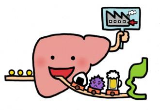 肝臓のイラスト│表面に無数の小さな穴を持つパラミロンが肝臓に溜まったアルコールを排出