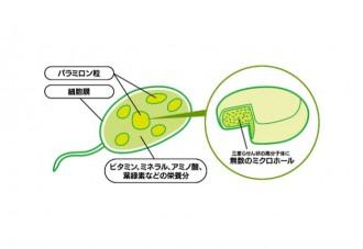 パラミロンのしくみのイラスト│「パラミロン」は食物繊維に似た働きで生活習慣病予防が期待できる
