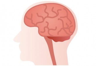 下垂体のイラスト│ミドリムシ(ユーグレナ)に含まれ、重要器官である下垂体の機能向上が期待できる「マンガン」とは?