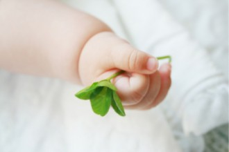 四葉のクローバーを握る赤ちゃんの画像│ミドリムシ(ユーグレナ)が妊婦さんに効果的な理由とは?