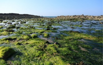 藻が繁殖している画像│ミドリムシ(ユーグレナ)はエネルギー・医療・環境問題など様々な分野で世界中から注目を集めています