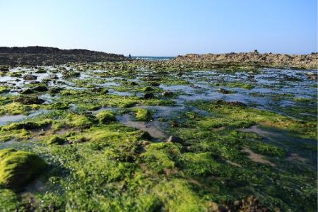 藻が繁殖している画像