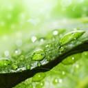 algae3