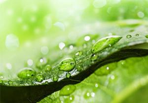 植物としての特徴―光合成をする