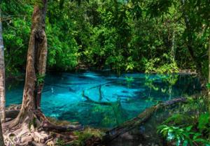 微細藻類は太古から生きている小さな藻の仲間