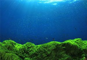 ミドリムシは虫ではなく藻